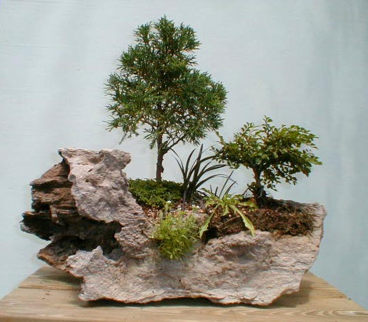 Hinoki Bonsai Club Roanoke Council Of Garden Clubs